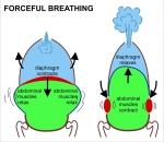 Breathe.1