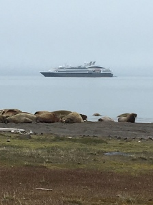 Arctic - walruses-ship